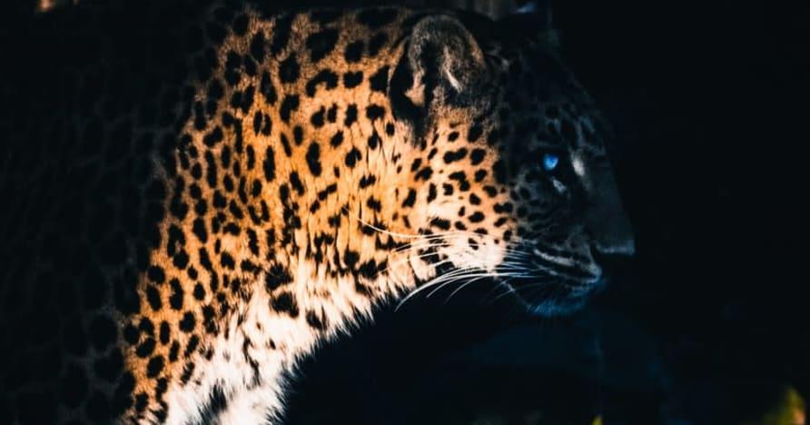 Yggdrasil Partners ReelPlay vapauttaa Jaguar SuperWays Bad Dingosta
